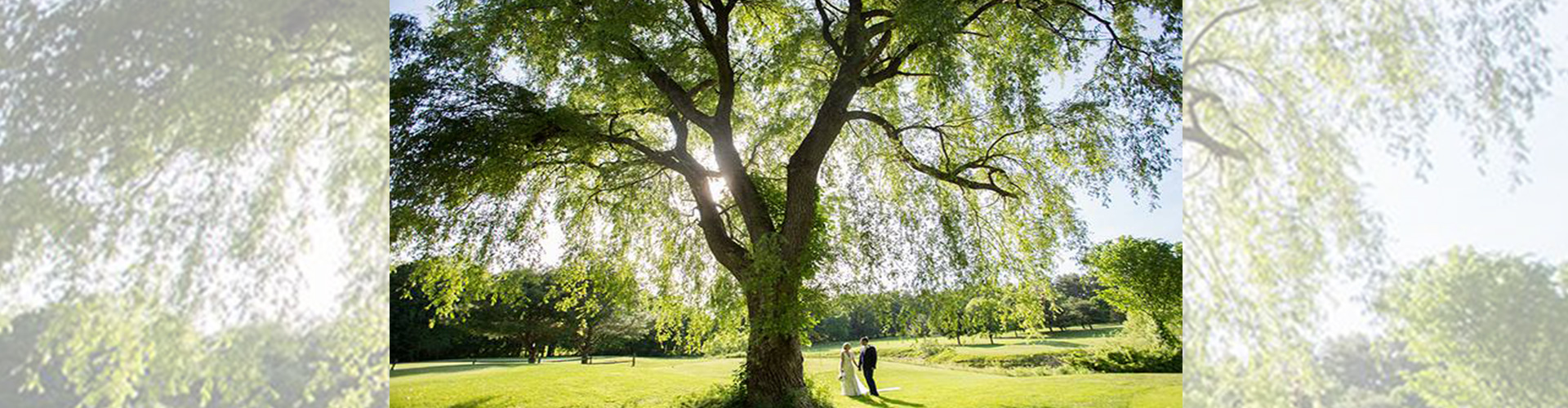 A newlywed couple stands under a tree on their wedding day at Butternut Farm Golf Club in Stow, Massachusetts